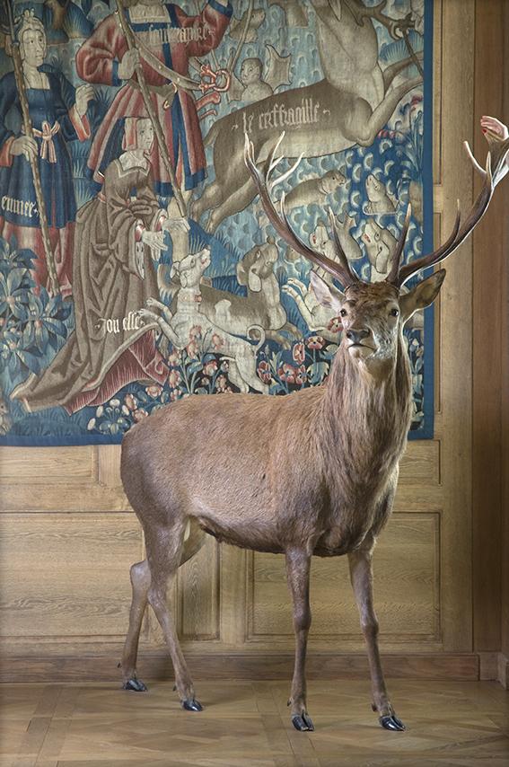 Tapisserie Le Cerf fragile (atelier français, début du XVIe siècle), Carole, cerf naturalisé. Musée de la Chasse et de la Nature. 2012